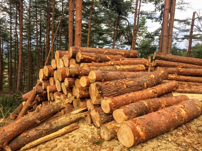 木を伐り森をつくる。間伐あとを見学してきたよ。