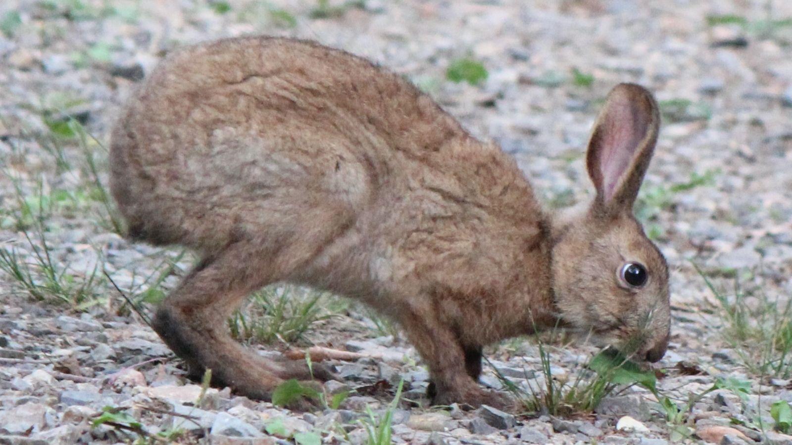 田舎では身近な狩猟。狩猟できる動物の種類が決まっているって知っていました?