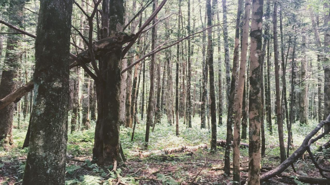実は森林大国だった!?日本の森林活用の現状とは。