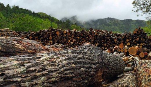 北海道木材と日本ハムファイターズのコラボにみる地域木材活用の可能性。