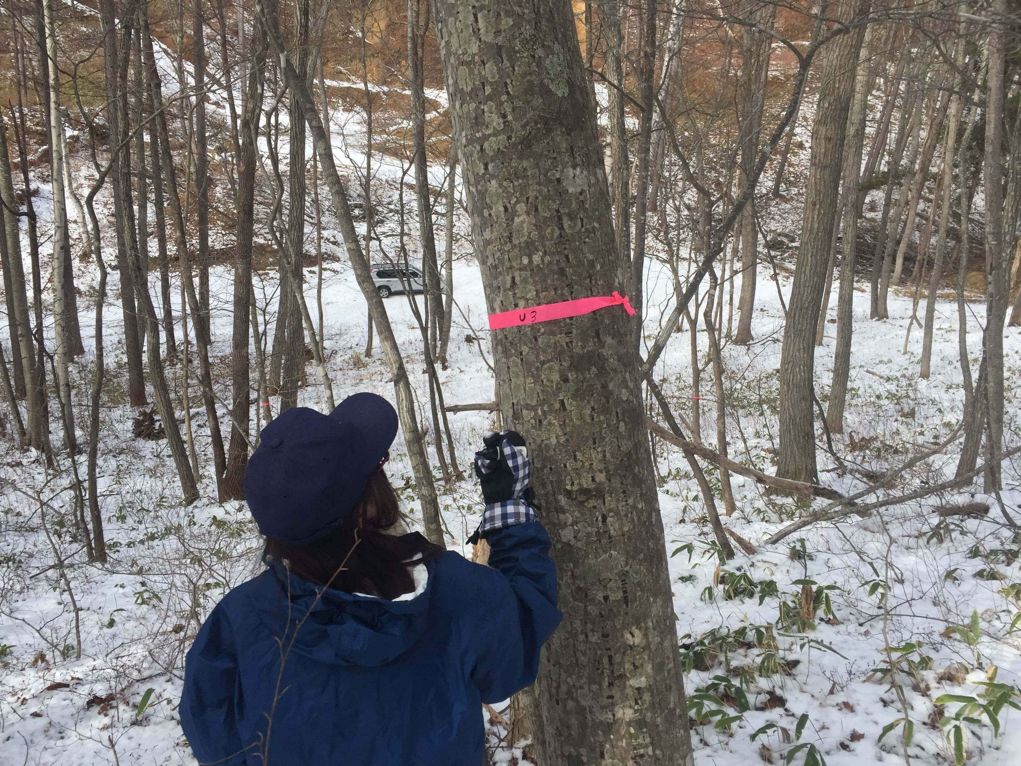 自家製メープルシロップも!?樹液採取の方法を教えるよ。   FOREST PEOPLE