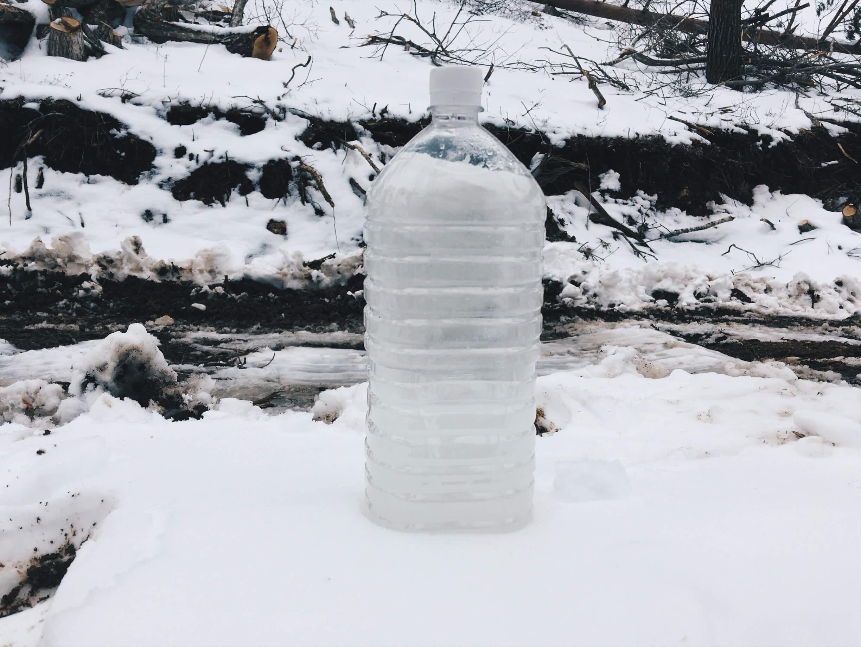 全部で6リットル超!ウリハダカエデの樹液を回収してきました。