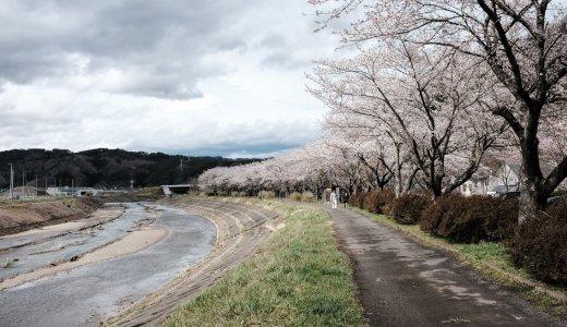 岩手県の桜・お花見スポット巡り〜宮古市の桜の名所を散歩する。