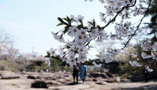 桜と団子とガラスと。「厳美渓」と「ガラスパークサファリ」でお花見を堪能する。
